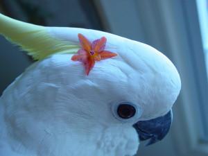 flowerbird4
